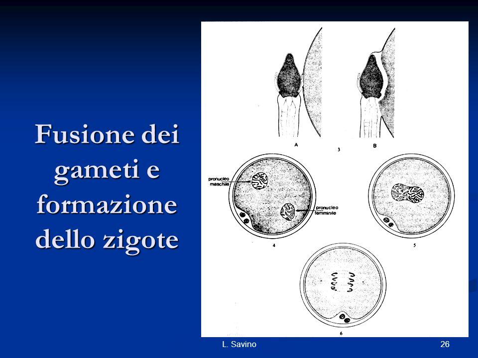 26L. Savino Fusione dei gameti e formazione dello zigote