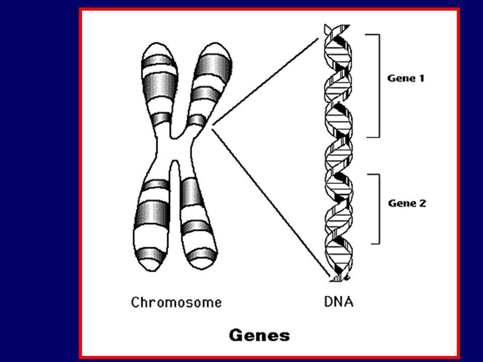 Irregolarità della trasmissione autosomica dominante Penetranza Frazione di individui con un dato genotipo (Aa) che manifestano il carattere associato con quel genotipo Es: acondroplasia: penetranza del 100% Espressività variabile Esprime la gravità fenotipica di un certo genotipo nellambito di una famiglia Es: distrofia miotonica: alcuni pazienti possono avere solo dei sintomi clinici (cataratta)