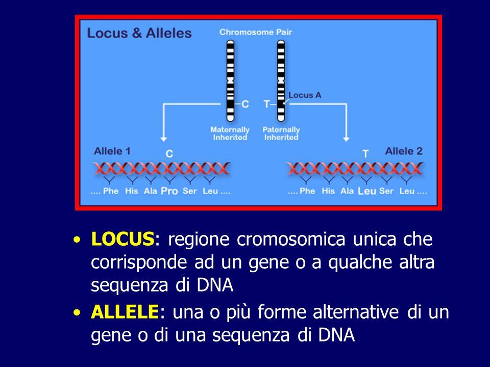 Eterozigote: individuo con alleli diversi allo stesso locus (CT) Omozigote: individuo con alleli identici ad uno stesso locus (CC o TT) Genotipo: costituzione genetica di un individuo o più specificamente gli alleli presenti ad ogni particolare locus Mutazione: alterazione della sequenza nucleotidica di una molecola di DNA Polimorfismo: variazione della sequenza nucleotidica di un gene, senza effetto fenotipico, che esiste nella popolazione con una frequenza di almeno l1%
