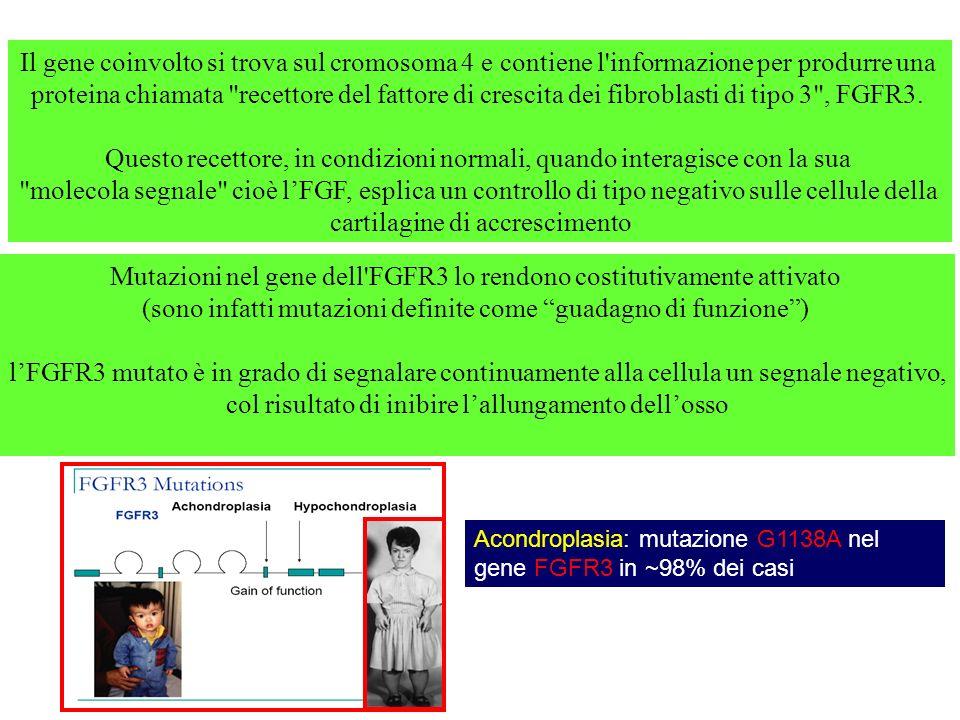 Il gene coinvolto si trova sul cromosoma 4 e contiene l'informazione per produrre una proteina chiamata