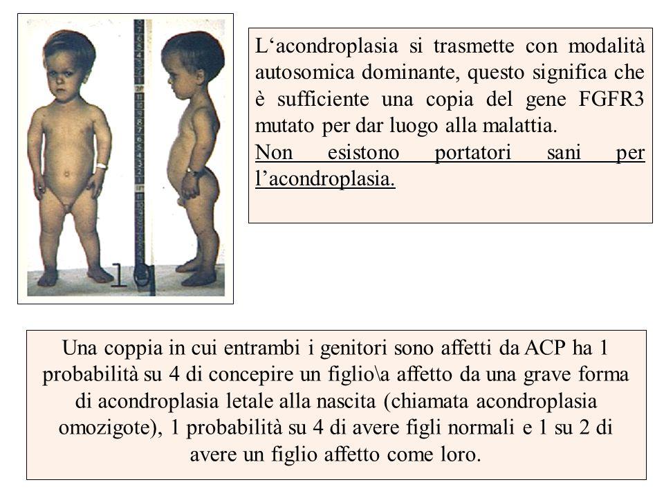 Lacondroplasia si trasmette con modalità autosomica dominante, questo significa che è sufficiente una copia del gene FGFR3 mutato per dar luogo alla m