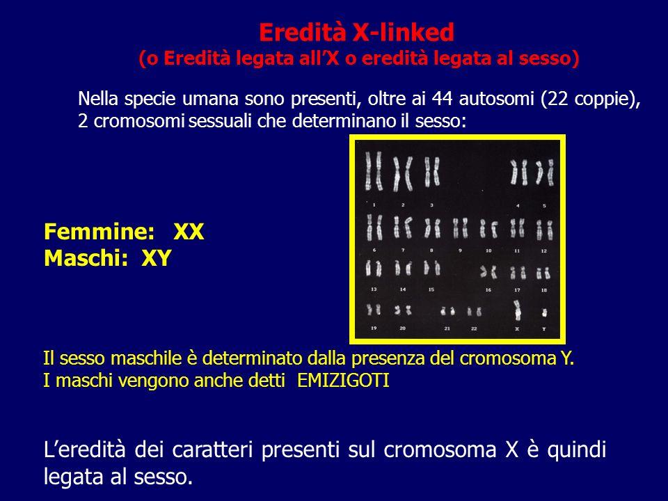 Eredità X-linked (o Eredità legata allX o eredità legata al sesso) Nella specie umana sono presenti, oltre ai 44 autosomi (22 coppie), 2 cromosomi ses