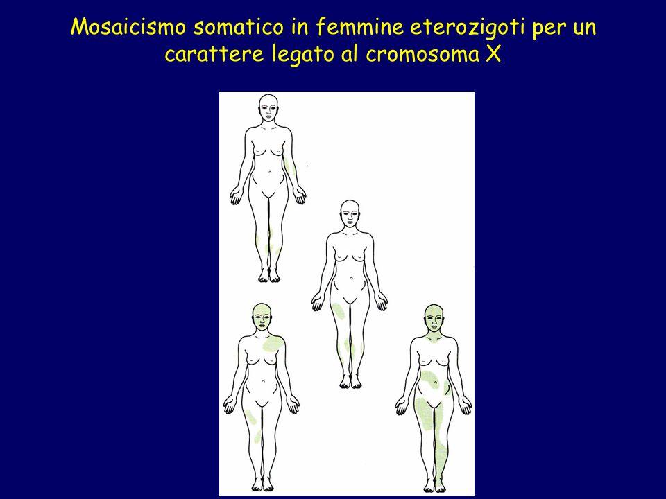 Mosaicismo somatico in femmine eterozigoti per un carattere legato al cromosoma X
