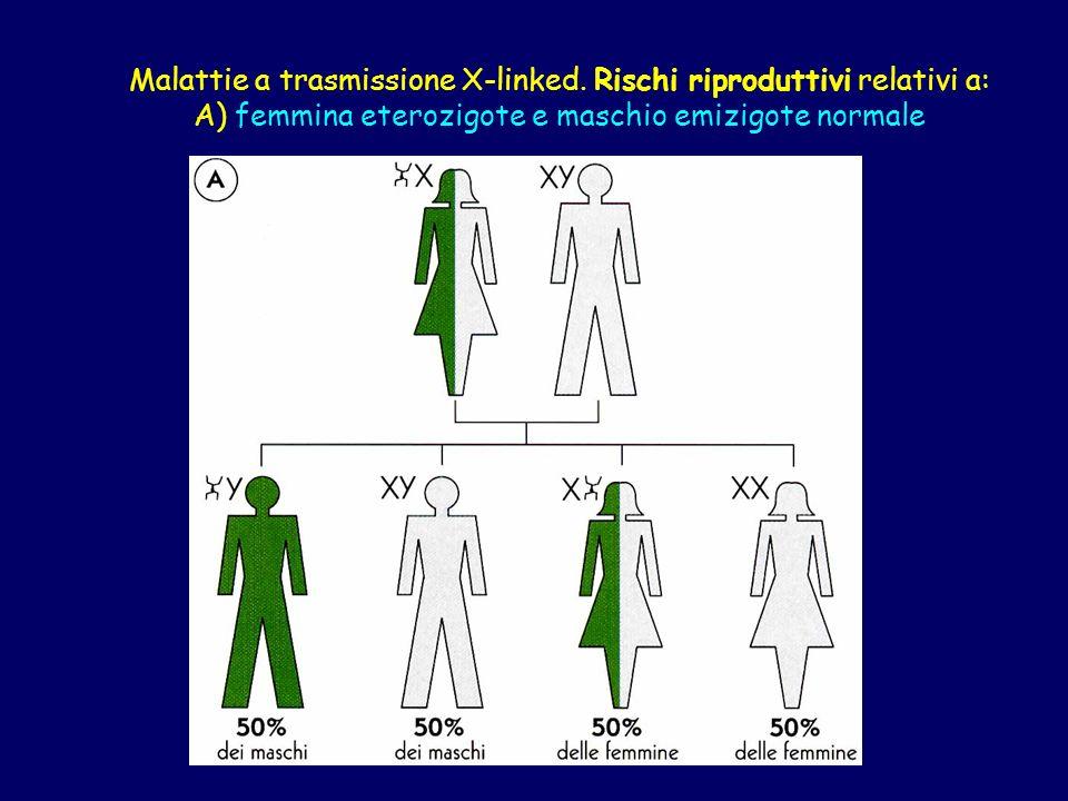 Malattie a trasmissione X-linked. Rischi riproduttivi relativi a: A) femmina eterozigote e maschio emizigote normale