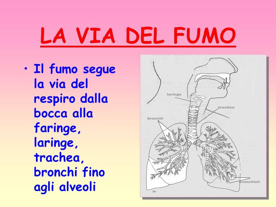 LA VIA DEL FUMO Il fumo segue la via del respiro dalla bocca alla faringe, laringe, trachea, bronchi fino agli alveoli