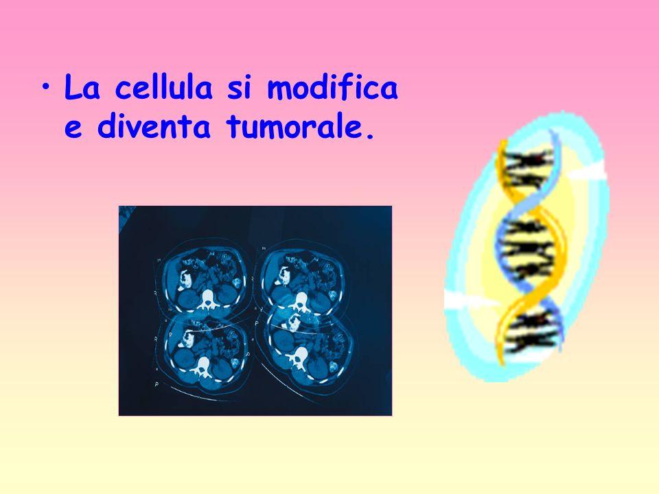 La cellula si modifica e diventa tumorale.