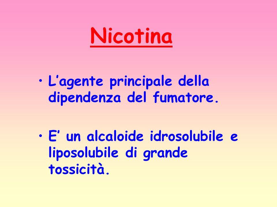 Nicotina Lagente principale della dipendenza del fumatore. E un alcaloide idrosolubile e liposolubile di grande tossicità.