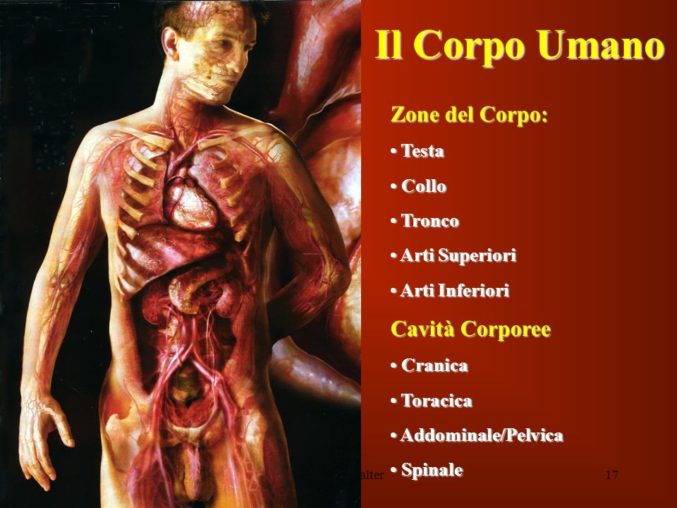 Inf. Sartor Valter17 Il Corpo Umano Zone del Corpo: Testa Testa Collo Collo Tronco Tronco Arti Superiori Arti Superiori Arti Inferiori Arti Inferiori