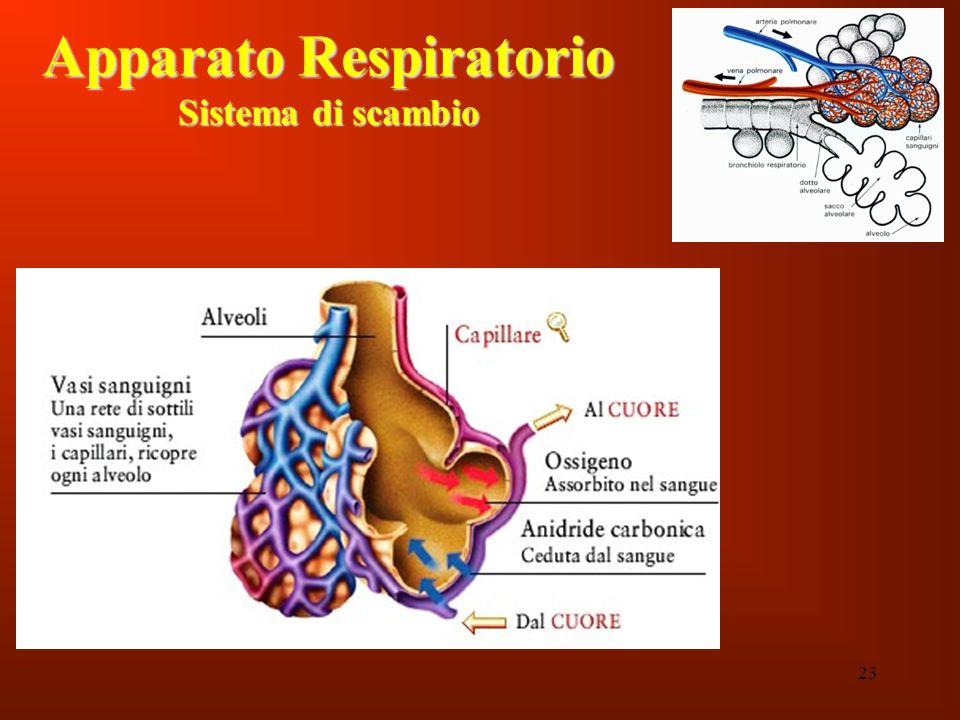 23 Apparato Respiratorio Sistema di scambio