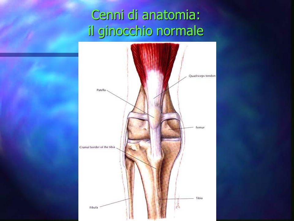 Cenni di anatomia: il ginocchio normale