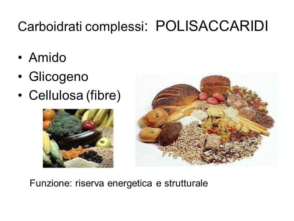 Carboidrati complessi : POLISACCARIDI Amido Glicogeno Cellulosa (fibre) Funzione: riserva energetica e strutturale
