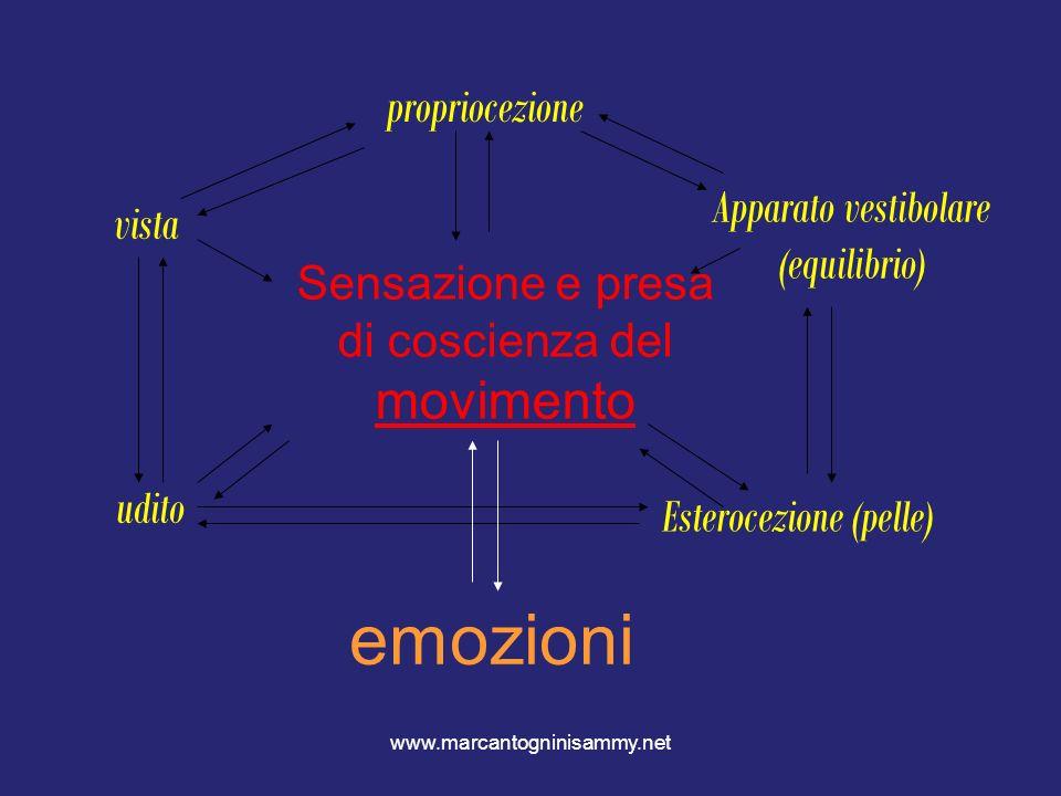 www.marcantogninisammy.net Sensazione e presa di coscienza del movimento propriocezione vista udito Esterocezione (pelle) Apparato vestibolare (equili