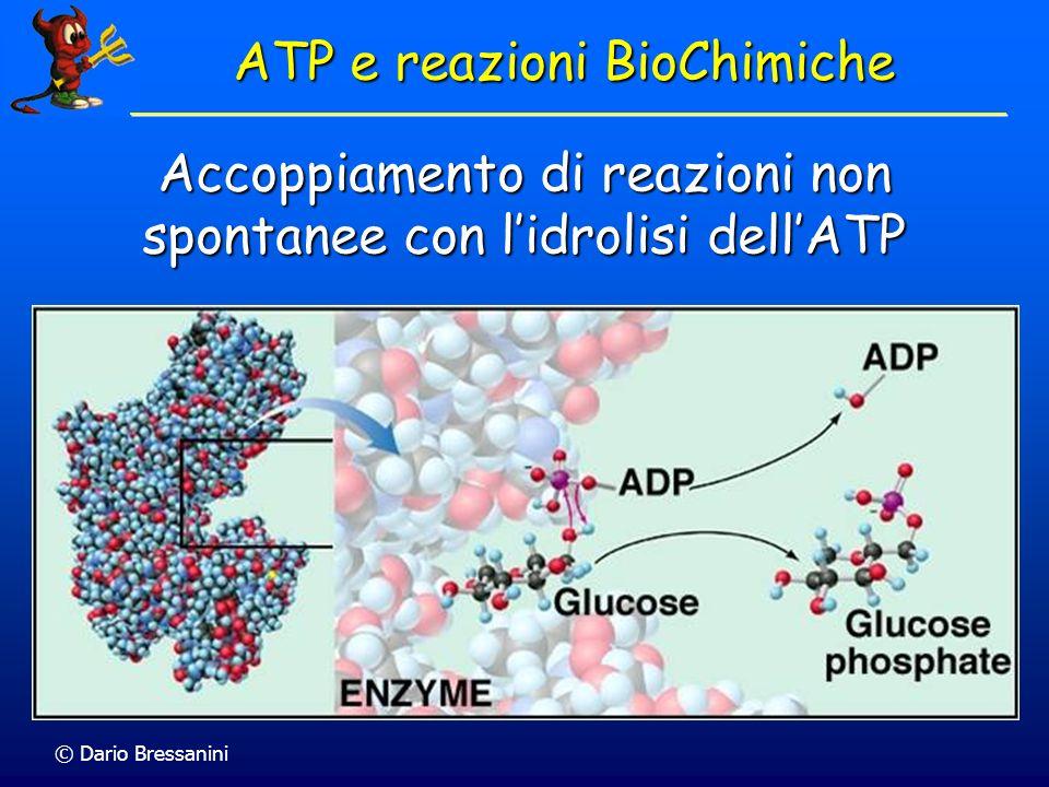 Accoppiamento di reazioni non spontanee con lidrolisi dellATP ATP e reazioni BioChimiche