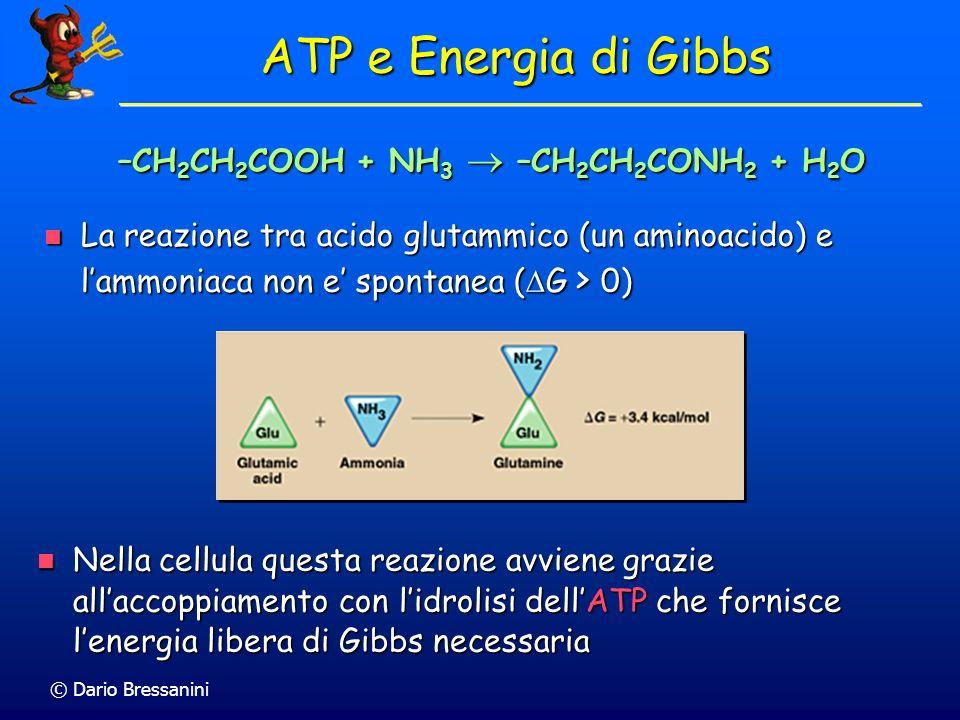 © Dario Bressanini –CH 2 CH 2 COOH + NH 3 –CH 2 CH 2 CONH 2 + H 2 O ATP e Energia di Gibbs La reazione tra acido glutammico (un aminoacido) e lammonia