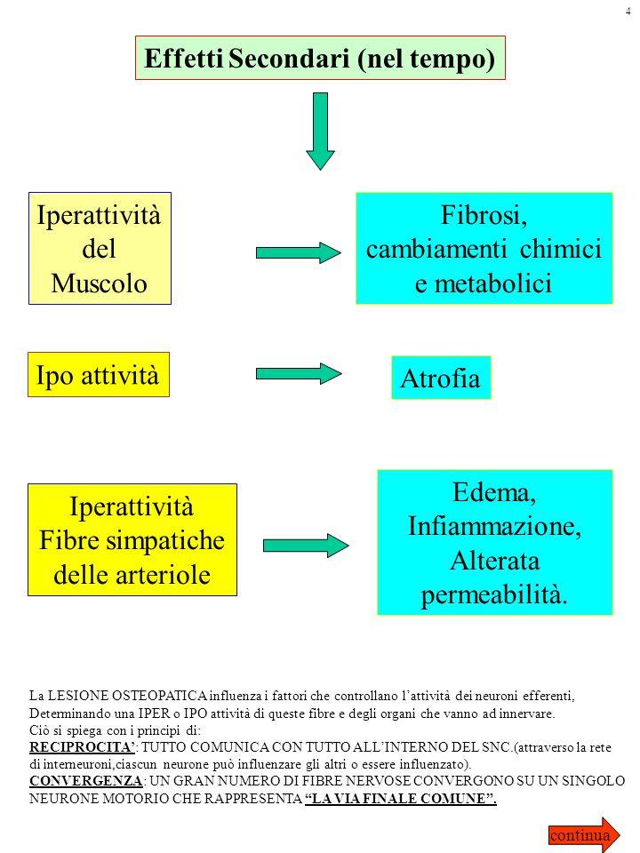 Effetti Secondari (nel tempo) Iperattività del Muscolo Fibrosi, cambiamenti chimici e metabolici Ipo attività Atrofia Iperattività Fibre simpatiche de