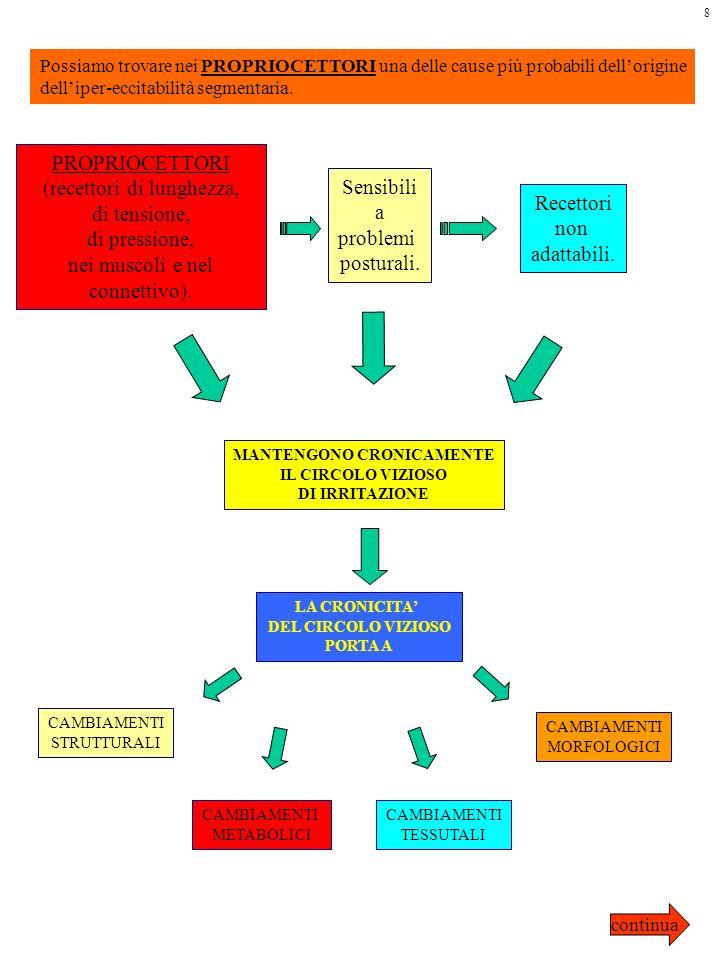 Possiamo trovare nei PROPRIOCETTORI una delle cause più probabili dellorigine delliper-eccitabilità segmentaria. PROPRIOCETTORI (recettori di lunghezz