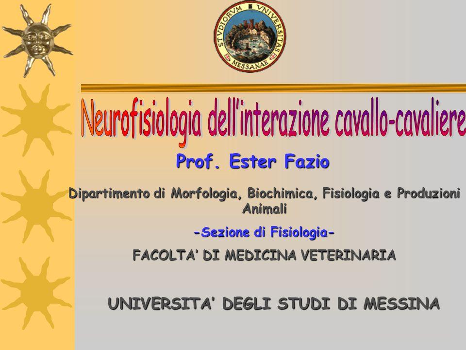 Prof. Ester Fazio UNIVERSITA DEGLI STUDI DI MESSINA Dipartimento di Morfologia, Biochimica, Fisiologia e Produzioni Animali -Sezione di Fisiologia- FA