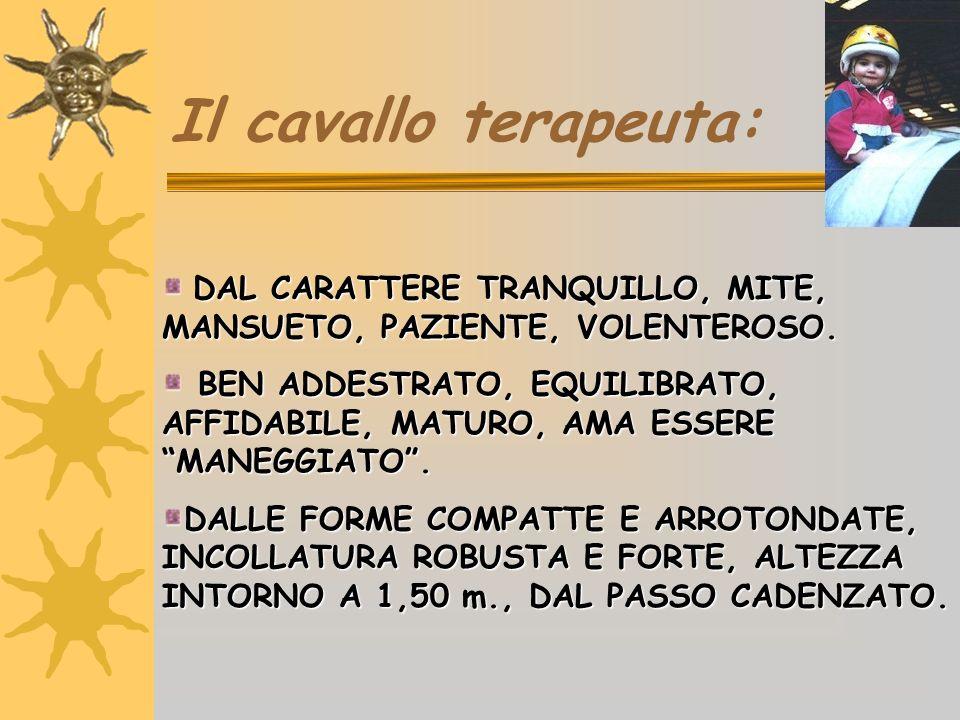 Il cavallo terapeuta: DAL CARATTERE TRANQUILLO, MITE, MANSUETO, PAZIENTE, VOLENTEROSO. DAL CARATTERE TRANQUILLO, MITE, MANSUETO, PAZIENTE, VOLENTEROSO