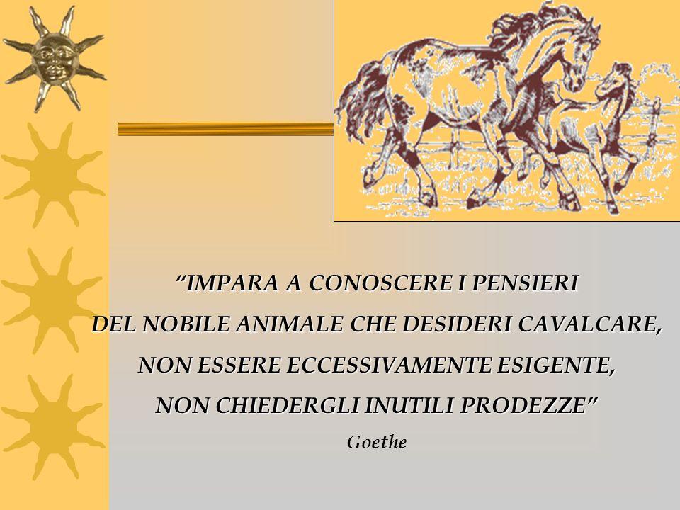 IMPARA A CONOSCERE I PENSIERI DEL NOBILE ANIMALE CHE DESIDERI CAVALCARE, NON ESSERE ECCESSIVAMENTE ESIGENTE, NON CHIEDERGLI INUTILI PRODEZZE Goethe