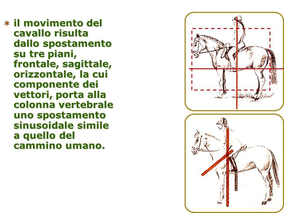 il movimento del cavallo risulta dallo spostamento su tre piani, frontale, sagittale, orizzontale, la cui componente dei vettori, porta alla colonna v