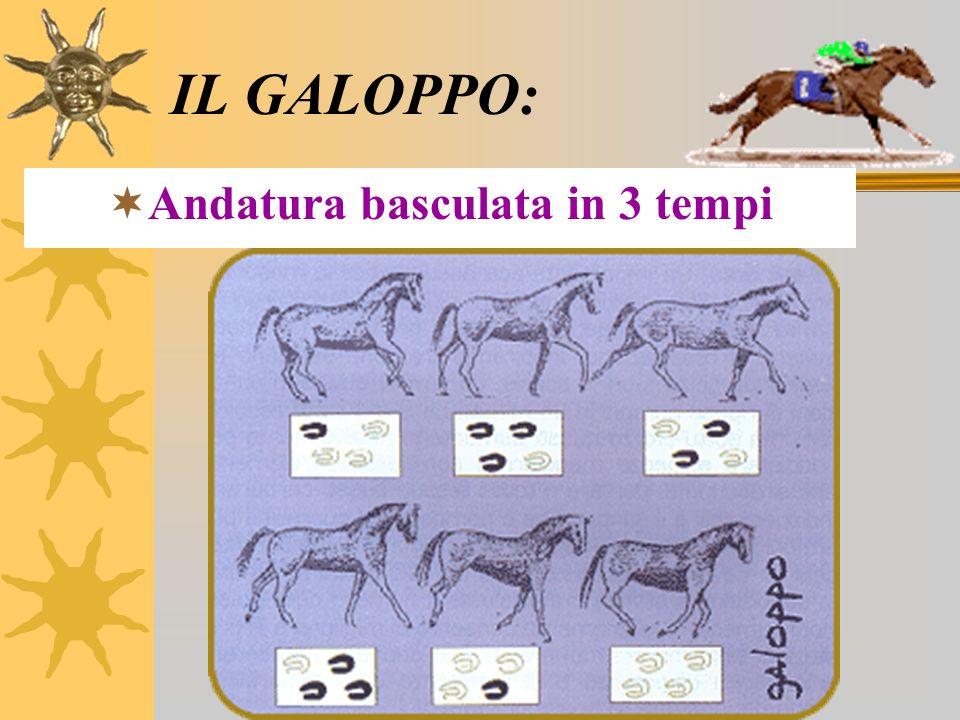 IL GALOPPO: Andatura basculata in 3 tempi