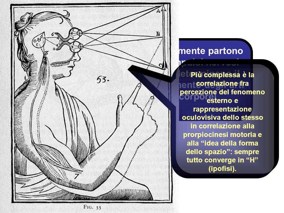 Dalla mente partono gli impulsi nervosi che determinano il movimento degli arti corporei Più complessa è la correlazione fra percezione del fenomeno e