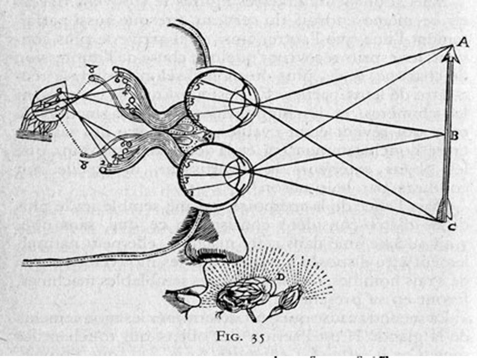 Perché il modello cognitivo cartesiano è oculo-visivo? Cartesio si convince, come già Platone (Teeteto), che essendo la percezione visiva stereoscopic