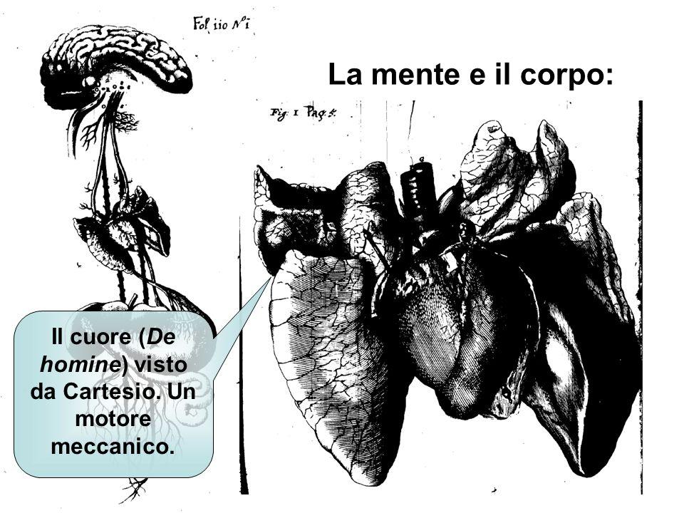 La mente e il corpo: Una macchina regolata dalla mente ma mossa dal cuore e alimentata dal sistema digerente Il cuore (De homine) visto da Cartesio. U