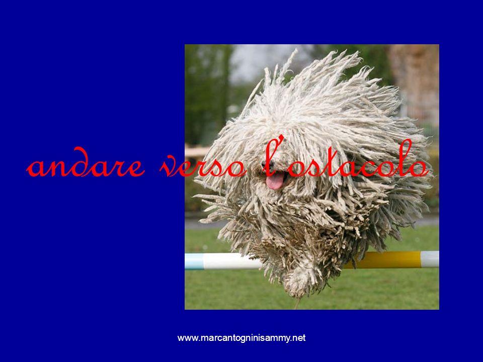 www.marcantogninisammy.net Laggressività risulta dal flusso di eccitazione che percorre il sistema muscolare, specialmente i grossi muscoli della schiena, delle gambe e delle braccia.
