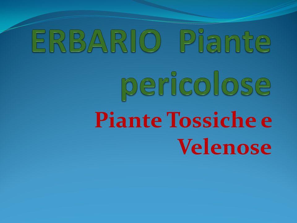 Piante Tossiche e Velenose