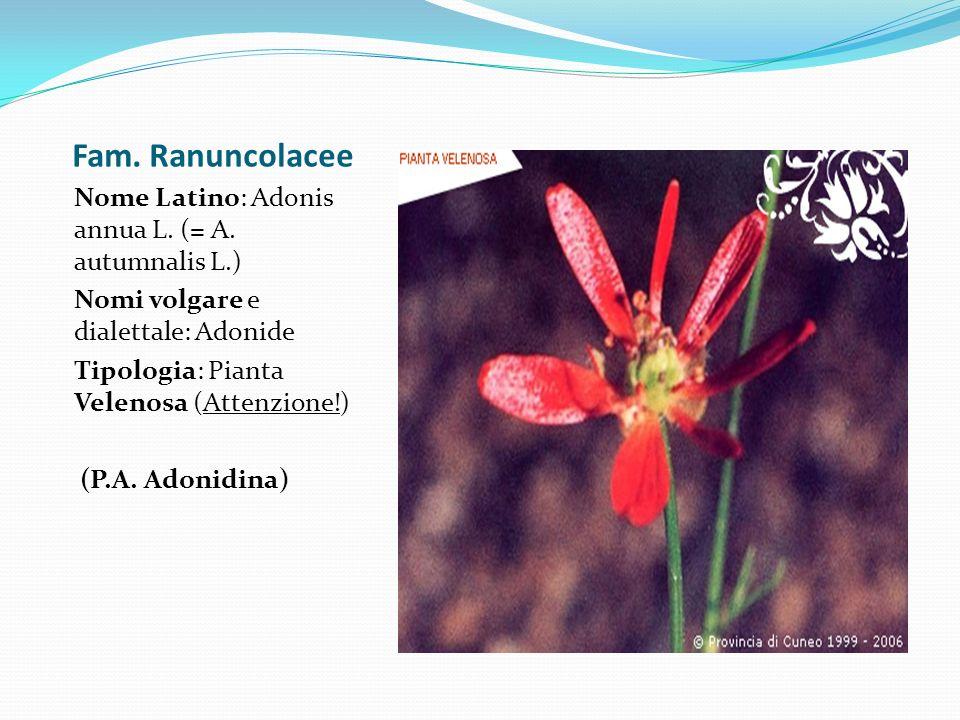 Fam. Ranuncolacee Nome Latino: Adonis annua L. (= A. autumnalis L.) Nomi volgare e dialettale: Adonide Tipologia: Pianta Velenosa (Attenzione!) (P.A.