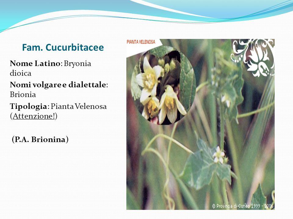 Fam. Cucurbitacee Nome Latino: Bryonia dioica Nomi volgare e dialettale: Brionia Tipologia: Pianta Velenosa (Attenzione!) (P.A. Brionina)