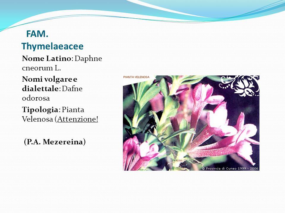 FAM. Thymelaeacee Nome Latino: Daphne cneorum L. Nomi volgare e dialettale: Dafne odorosa Tipologia: Pianta Velenosa (Attenzione! (P.A. Mezereina)