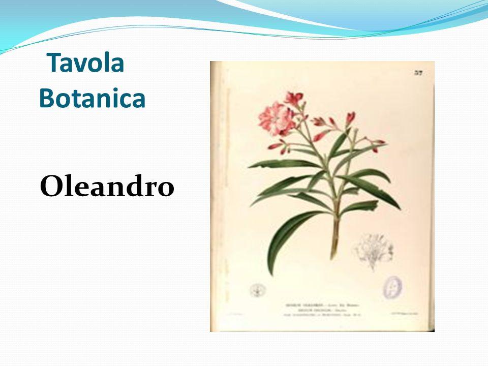 Tavola Botanica Oleandro