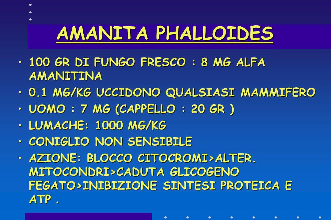 SINDROME PAXILLICA SINTOMI: MALESSERE-VOMITO-DOLORI ADDOMINALI-DIARREA-EMOGLOBINURIA- DISPNEA-ITTERO-PROSTRAZIONE-SHOCK- EXITUS, A VOLTE 4 ORE DOPO L'