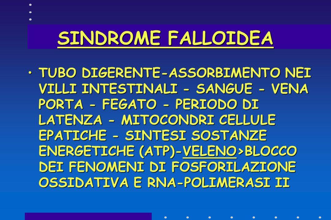 SINDROME FALLOIDEA FALLOIDINE : MENO TOSSICHE - AZIONE RAPIDA (EFFICACE E.V-MENO PER OS)FALLOIDINE : MENO TOSSICHE - AZIONE RAPIDA (EFFICACE E.V-MENO