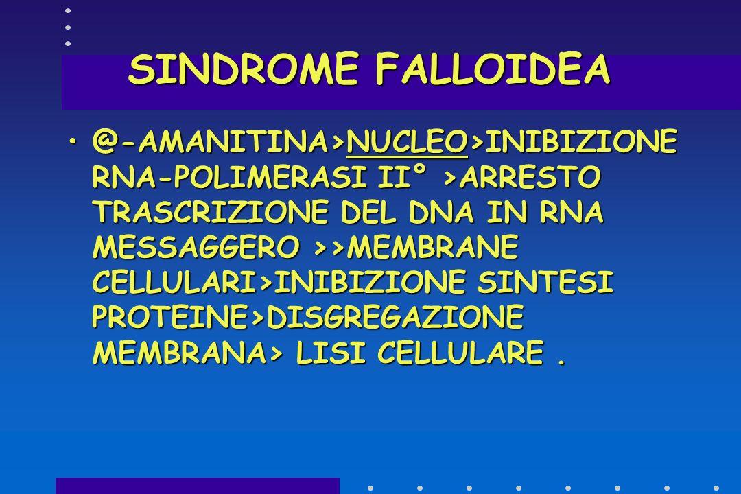 SINDROME FALLOIDEA TOSSINE >RECETTORE MEMBRANA EPATICA >PENETRAZIONE ALL'INTERNO DELLA CELLULA ATTRAVERSO IL SISTEMA SINUSOIDALE DI TRASPORTO DEI SALI