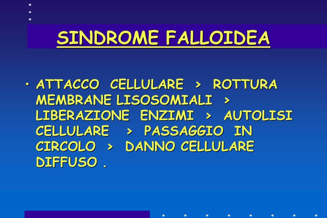 SINDROME FALLOIDEA DANNO EPATICO : MICROSOMI >INIBIZIONE DELLA INCORPORAZIONE DEGLI AMMINOACIDI ENTRO 2 ORE FALLOIDINA> RETICOLO ENDOPLASMICO E MITOCO