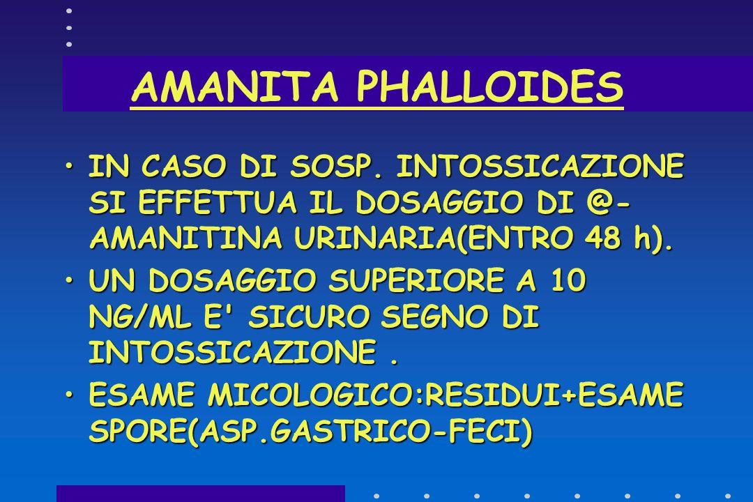 SINDROME FALLOIDEA ATTACCO CELLULARE > ROTTURA MEMBRANE LISOSOMIALI > LIBERAZIONE ENZIMI > AUTOLISI CELLULARE > PASSAGGIO IN CIRCOLO > DANNO CELLULARE
