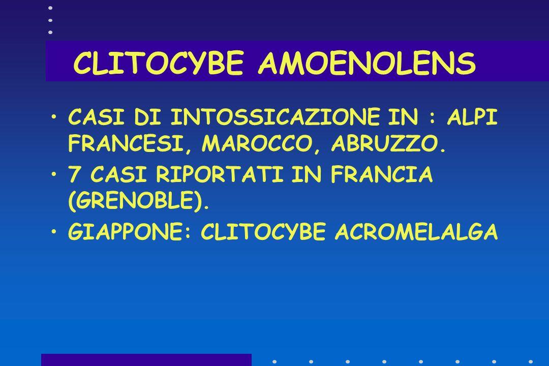 Clitocybe amoenolens 3