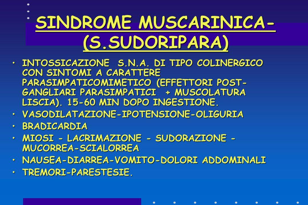 SINDROME MUSCARINICA AGENTE TOSSICO: MUSCARINAAGENTE TOSSICO: MUSCARINA ANALOGO STRUTTURALE Ach,NON RIMOSSO DALL ENZIMA ACETILCOLINESTERASI.ANALOGO ST