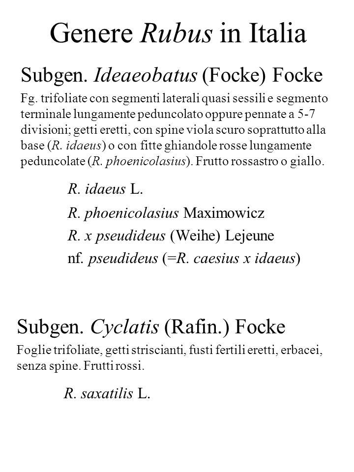 Genere Rubus in Italia Subgen. Ideaeobatus (Focke) Focke Fg. trifoliate con segmenti laterali quasi sessili e segmento terminale lungamente peduncolat