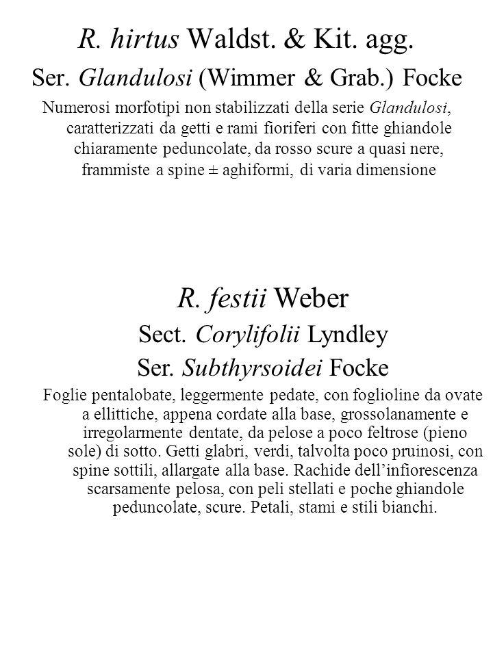R. hirtus Waldst. & Kit. agg. Ser. Glandulosi (Wimmer & Grab.) Focke Numerosi morfotipi non stabilizzati della serie Glandulosi, caratterizzati da get
