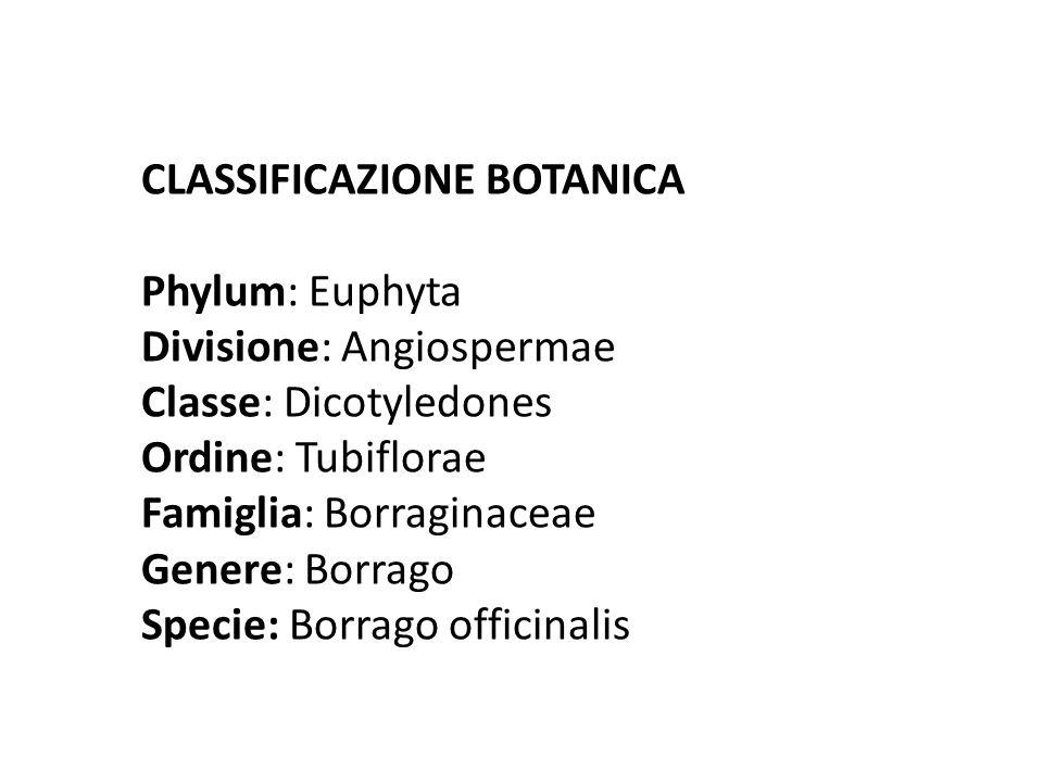 CLASSIFICAZIONE BOTANICA Phylum: Euphyta Divisione: Angiospermae Classe: Dicotyledones Ordine: Tubiflorae Famiglia: Borraginaceae Genere: Borrago Spec