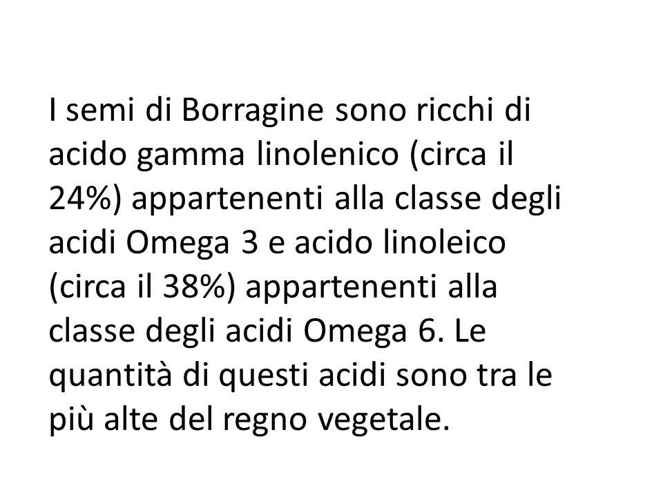 I semi di Borragine sono ricchi di acido gamma linolenico (circa il 24%) appartenenti alla classe degli acidi Omega 3 e acido linoleico (circa il 38%)