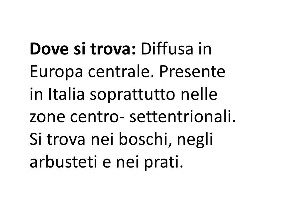 Dove si trova: Diffusa in Europa centrale. Presente in Italia soprattutto nelle zone centro- settentrionali. Si trova nei boschi, negli arbusteti e ne