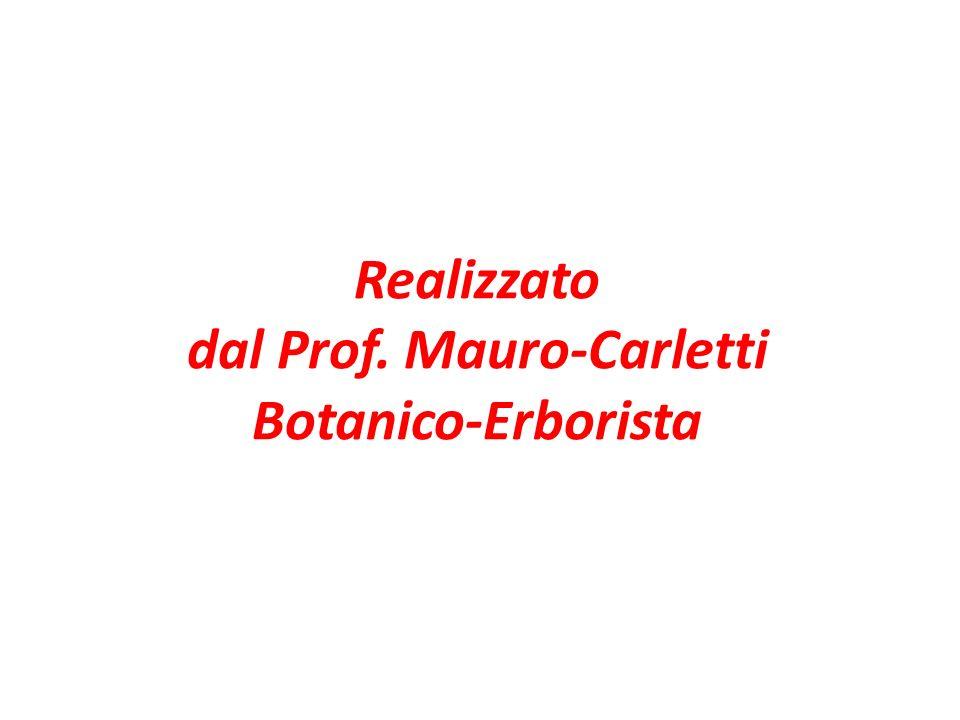 Realizzato dal Prof. Mauro-Carletti Botanico-Erborista
