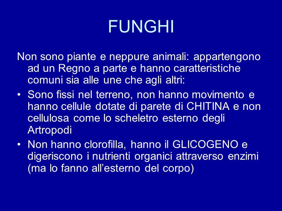 FUNGHI Non sono piante e neppure animali: appartengono ad un Regno a parte e hanno caratteristiche comuni sia alle une che agli altri: Sono fissi nel
