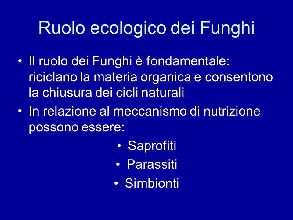 Ruolo ecologico dei Funghi Il ruolo dei Funghi è fondamentale: riciclano la materia organica e consentono la chiusura dei cicli naturali In relazione
