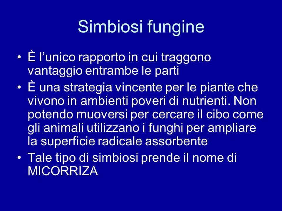 Simbiosi fungine È lunico rapporto in cui traggono vantaggio entrambe le parti È una strategia vincente per le piante che vivono in ambienti poveri di